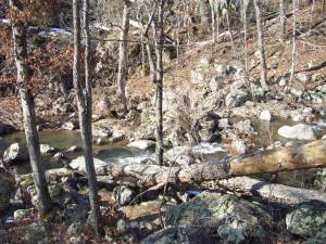 The creek below the campsite in the morning